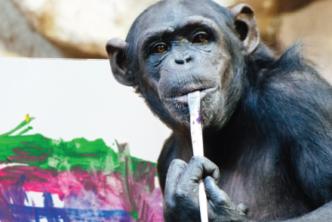 Zobacz obrazy szympansicy Lucy zwarszawskiego ZOO