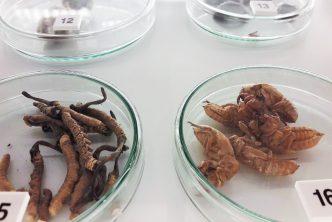 Egzotyka, tradycja iprzemysł. Muzeum Farmacji już otwarte