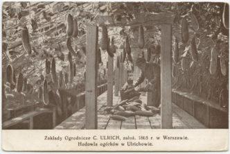 Historia rodziny Ulrichów, cz.3.