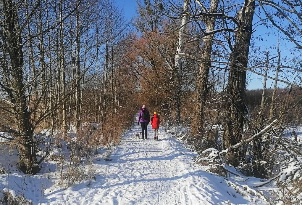 Fotografia. Zimowy krajobraz, ścieżka wlesie pokryta sniegiem, woddali dwie spacerujące postacie zpsem.