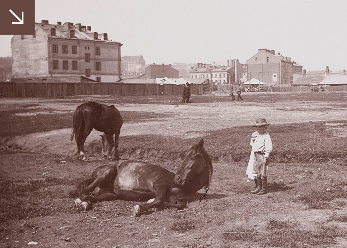 Photo of the horse on the ground