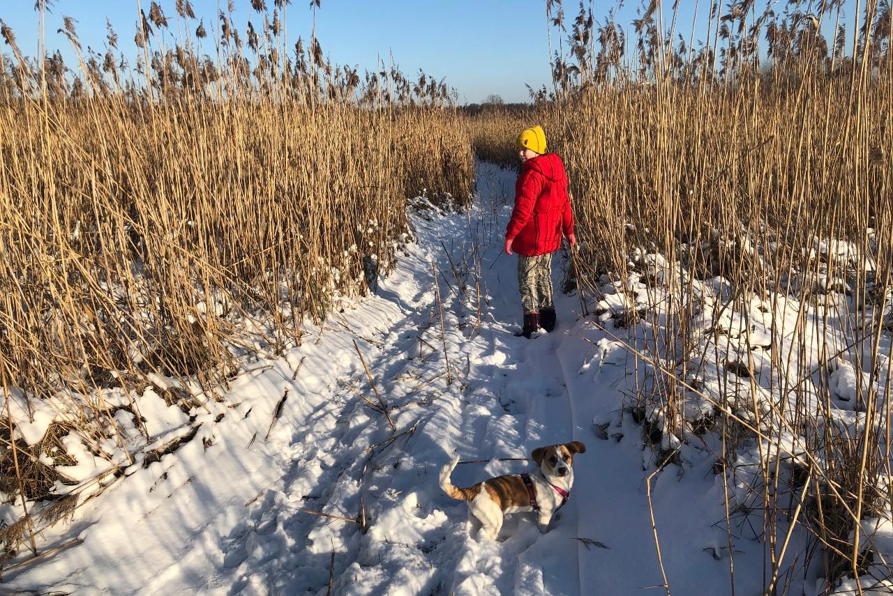 Fotografia krajobraz zimowy. Dziewczyna zpieskiem idzie ośnieżoną ścieżką pośród trzcin.