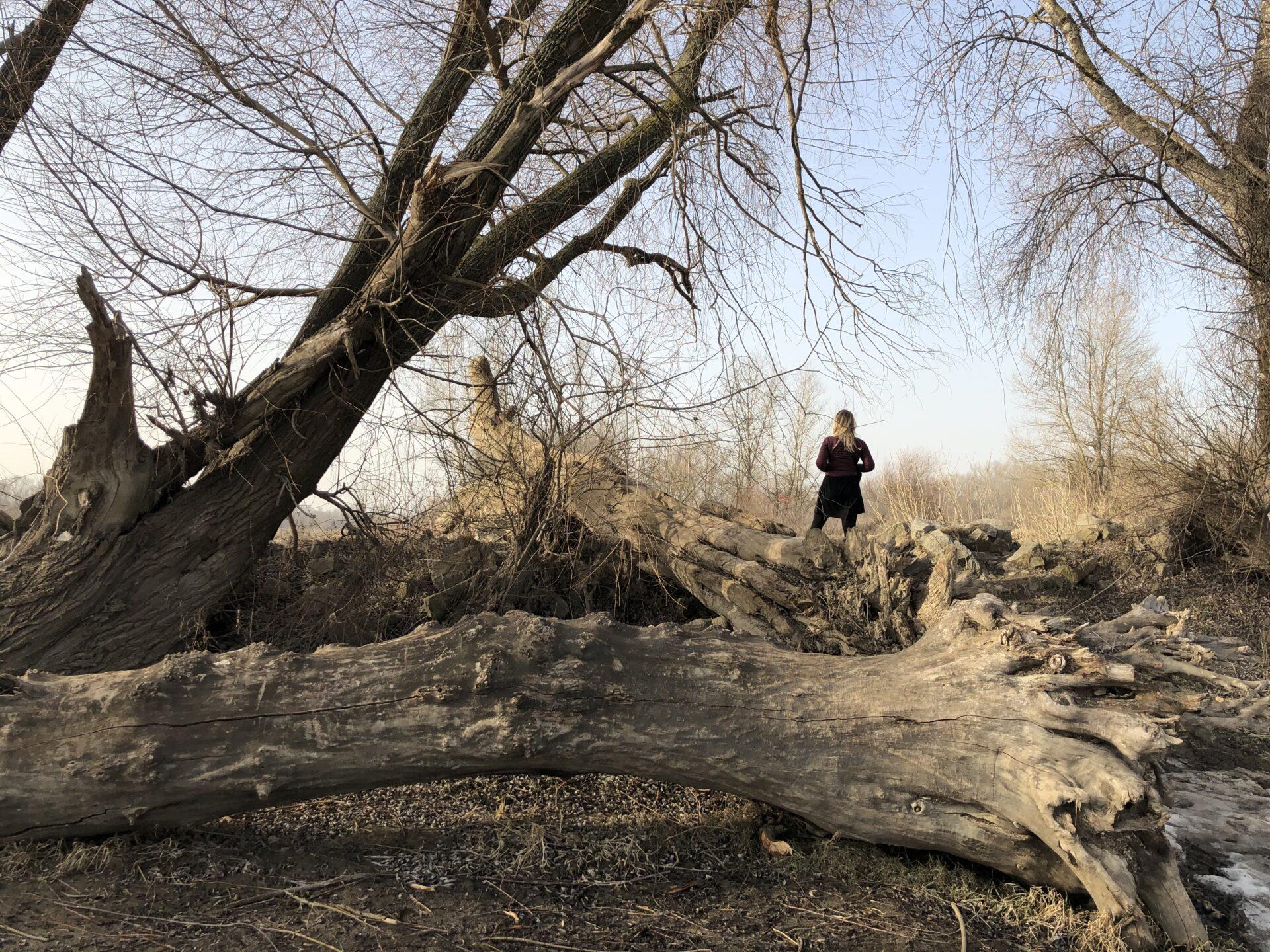 Zdjęcie. Nazewnątrz odwrócona tyłem kobieta pośród przewalonych drzew.