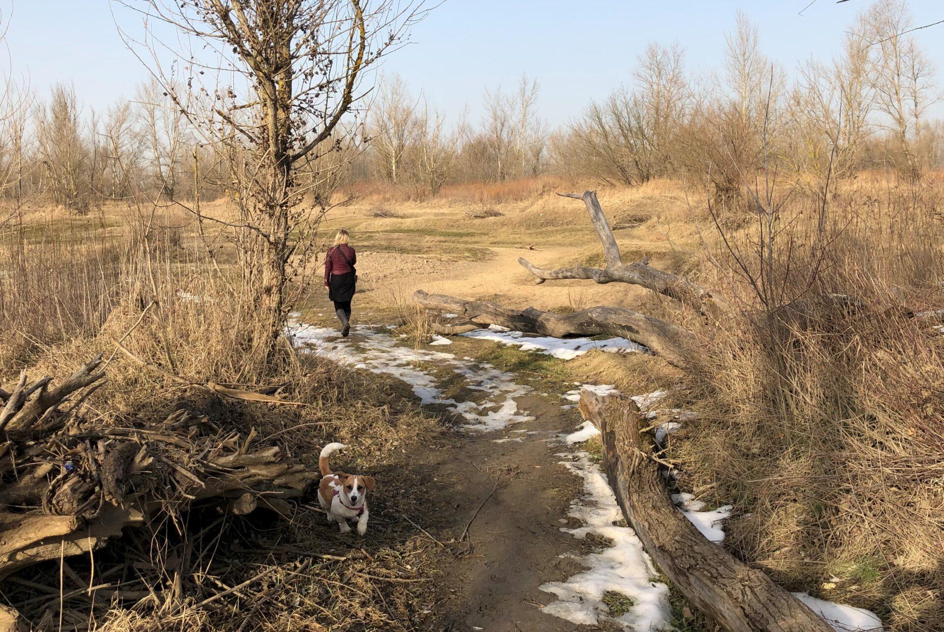 Zdjęcie. Nazewnątrz kobieta spaceruje zpsem połące pokrytej gdzieniegdzie śniegiem.
