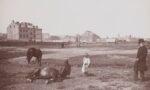 Dwa konie, jeden leżący drugi stojący, obok dziewczynka, którananiepatrzy, wtle budynki