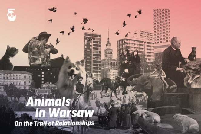 Animals in Warsaw. On The Trail of Relationships