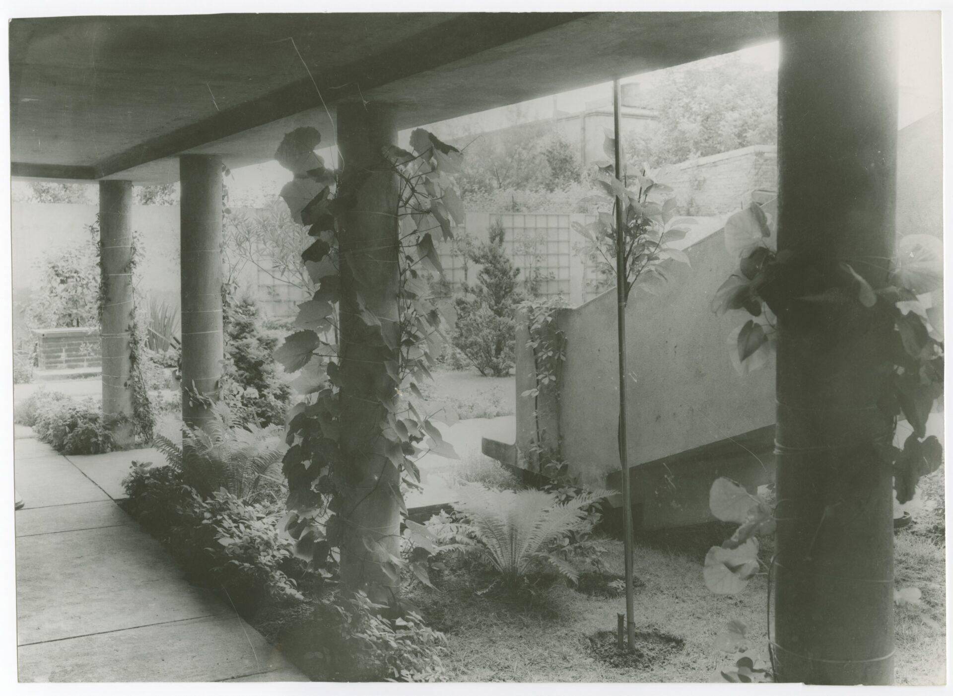 Czarno-białe zdjęcie. Fragment budynku porośniętego bluszczem.