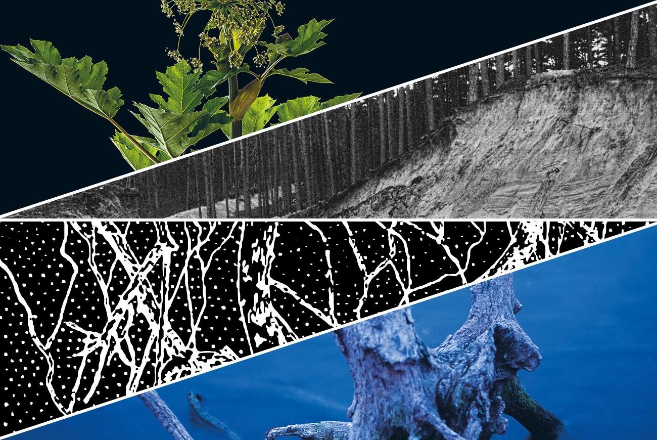 """Wydarzenia towarzyszące wystawie """"Jak powraca las"""""""
