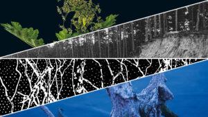 grafika z 4 trójkątów, najwyżej roślina na czarnym tle, niżej stare zdjęcie sosnowego lasu, kolejne grafika systemu korzeniowego, ostatnie konar drzewa wystający z wody