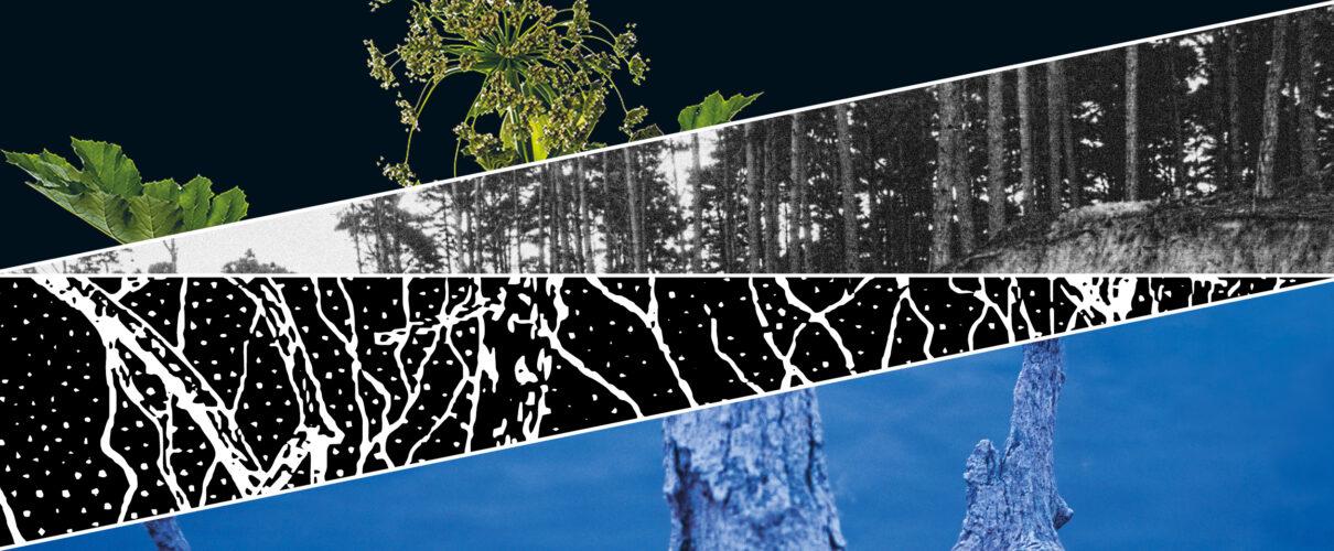 grafika z czterech trójkątów, każdy wypełniony innym obrazem, pierwszy roślina na czarnym tle, drugi stare zdjęcie lasu sosnowego, trzeci grafika systemu korzeniowego, czwarty zdjęcie konaru drzewa wystającego z wody